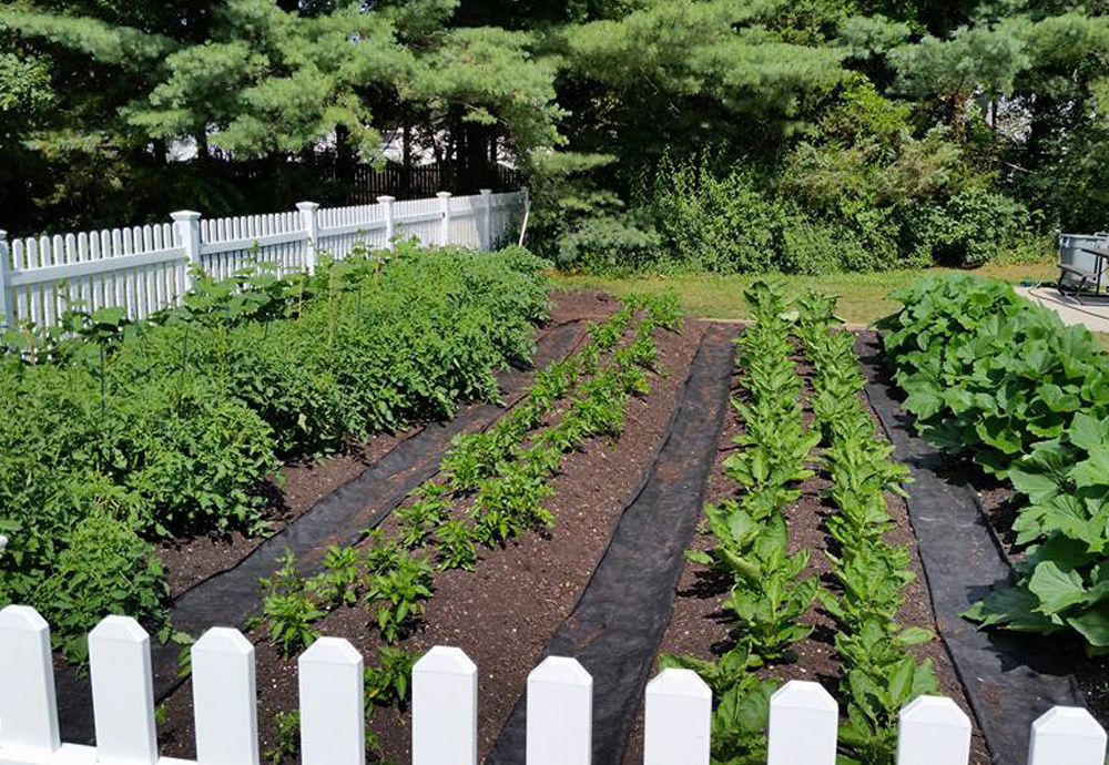 The HOPE Center's garden overflows with more than just produce